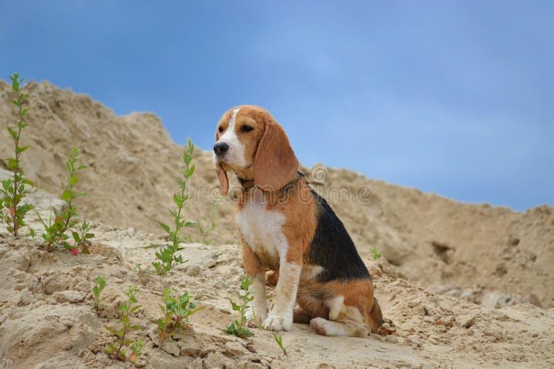 湿狗坐在蓝天背景的沙子 免版税库存照片