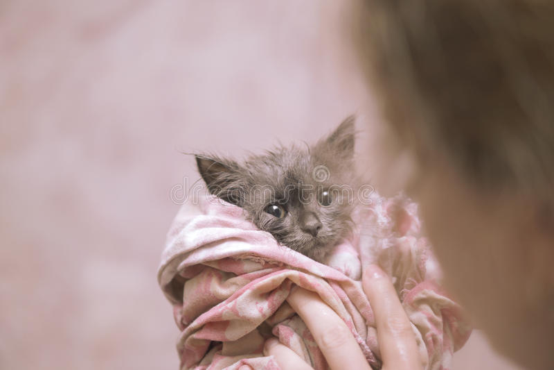 湿的小猫 库存图片
