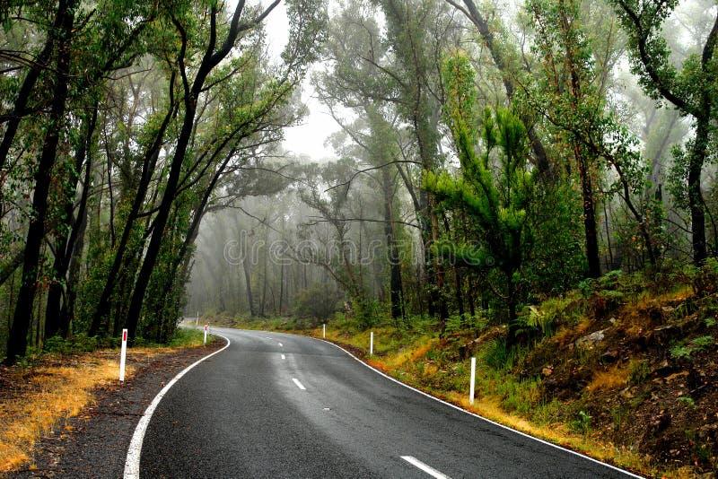 湿的森林公路 免版税库存图片
