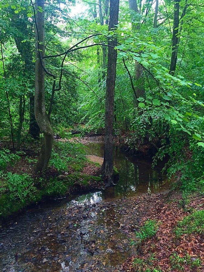 湿的森林 库存图片