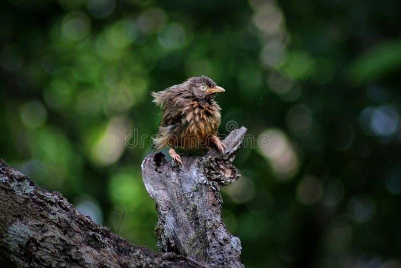 湿的鸟 库存照片