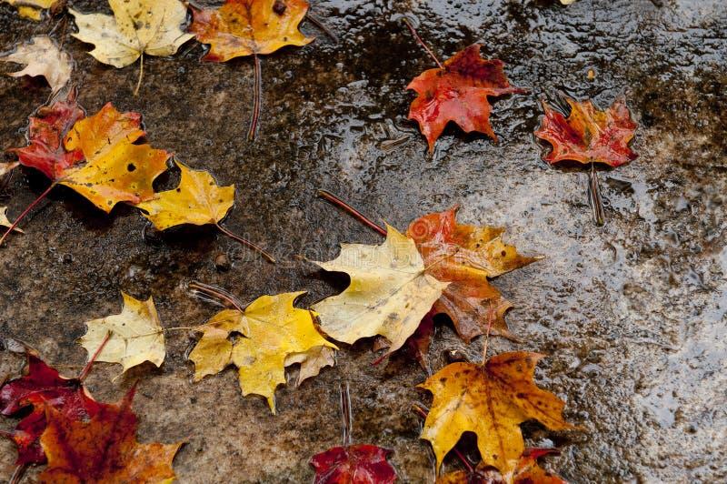 湿秋叶的路面 免版税库存图片