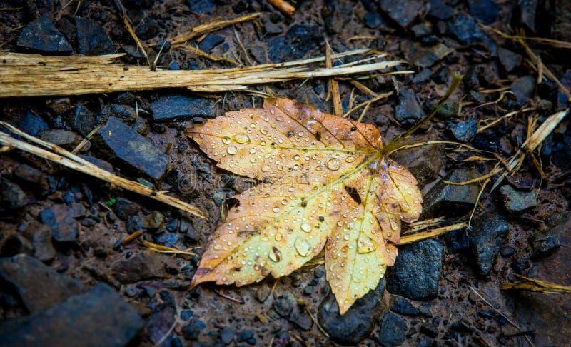 湿秋天的叶子 免版税库存图片