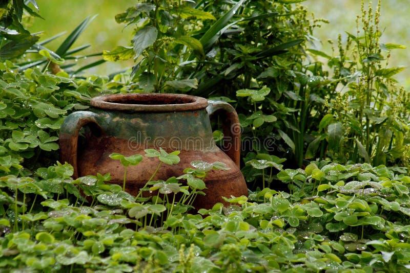 湿罐的三叶草 免版税库存照片