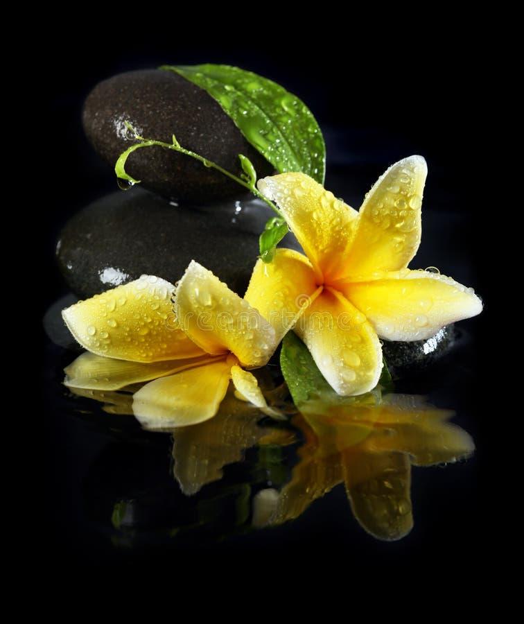 湿花的石头 免版税库存图片