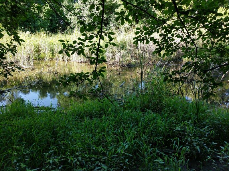 湿软的沼泽地在Sertoma公园内的森林 免版税库存照片