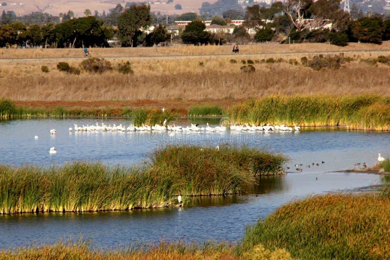 湿软的盐在土狼小山地方公园,佛瑞蒙,加利福尼亚筑成池塘 图库摄影