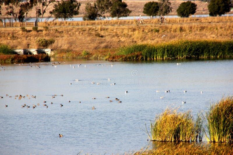 湿软的盐在土狼小山地方公园,佛瑞蒙,加利福尼亚筑成池塘 库存照片