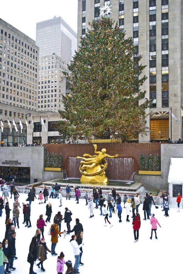 溜冰者结构树 免版税图库摄影