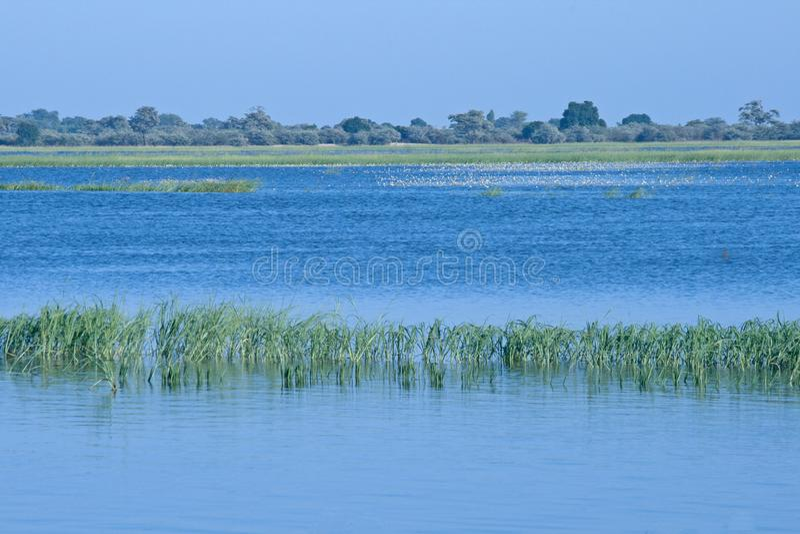 溢出它的银行在雨季节以后的CHOBE河 库存图片