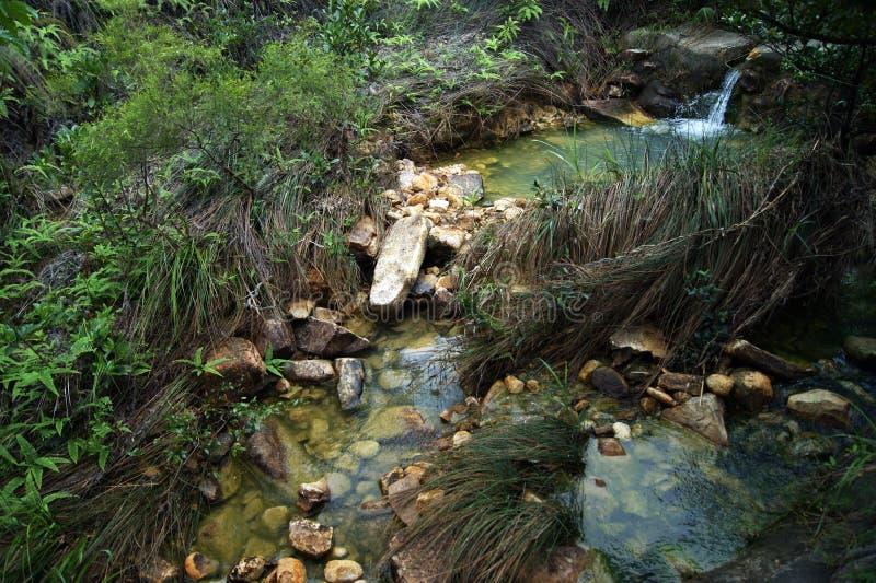 溪在密林 库存图片