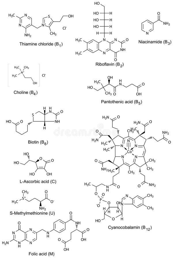 水溶性维生素化学结构  向量例证