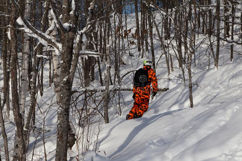 滑动在新鲜的粉末雪的橙色伪装成套装备的挡雪板在森林里 库存照片