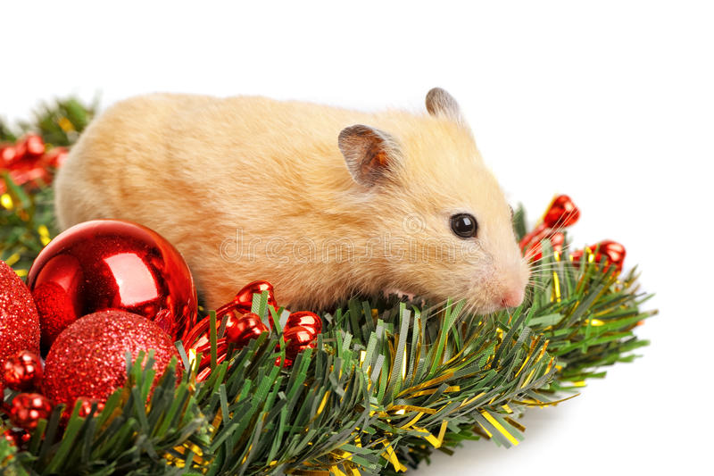 Download 滑稽的仓鼠一点 库存图片. 图片 包括有 常青树, 嵌套, 特写镜头, 沙鼠, 逗人喜爱, 哺乳动物, 气球 - 22356463