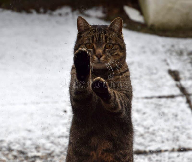 滑稽的动物,在窗口的逗人喜爱的猫身分 免版税库存图片