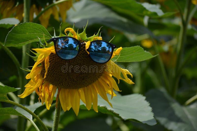 滑稽的向日葵女用披肩我的太阳镜 免版税库存图片