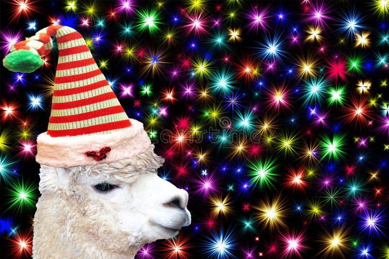 滑稽的圣诞节动物卡片戴圣诞节矮子帽子的骆马隔绝在与五颜六色的星的黑背景 免版税库存照片