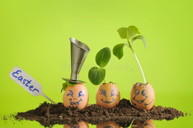 滑稽的复活节彩蛋的,与表示的微笑的面孔三棵有机幼木植物在柠檬绿背景, eco从事园艺 图库摄影
