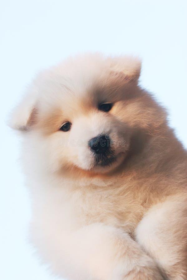 滑稽的小狗 图库摄影