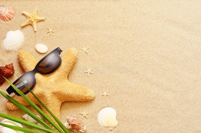 滑稽的海星和贝壳在夏天靠岸与沙子 免版税库存图片