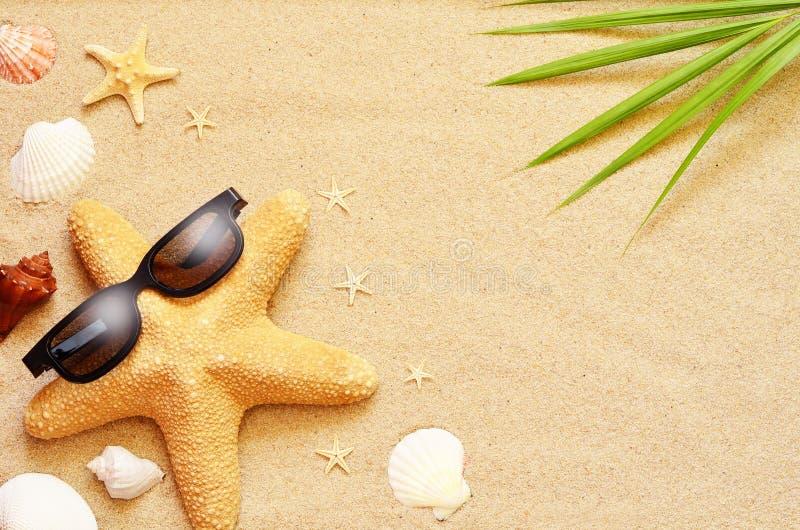 滑稽的海星和贝壳在夏天靠岸与沙子 图库摄影