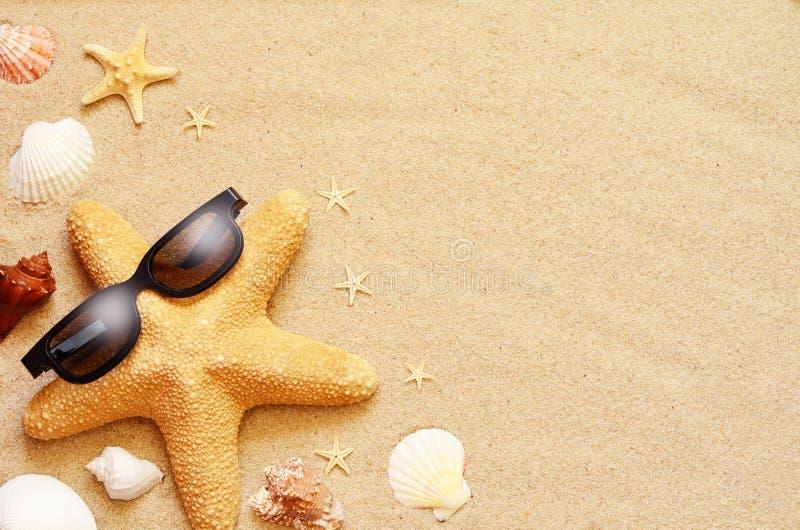 滑稽的海星和贝壳在夏天靠岸与沙子 库存图片