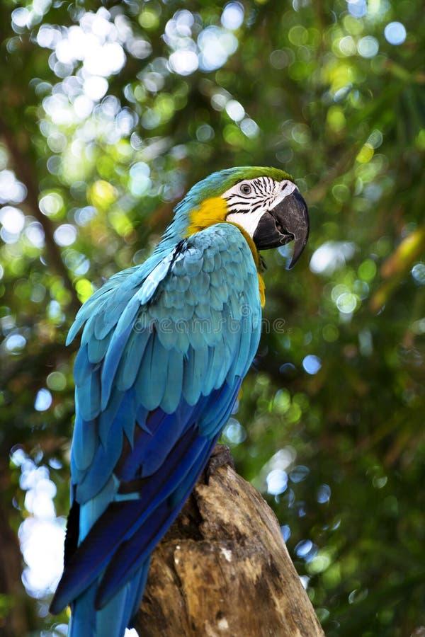 滑稽的热带鹦鹉,加勒比 图库摄影