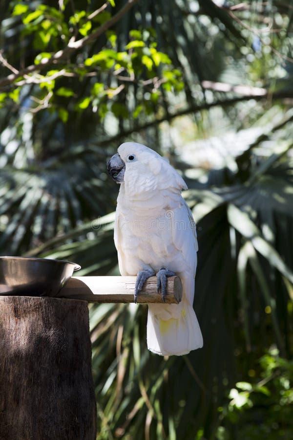滑稽的热带鹦鹉,加勒比 免版税图库摄影