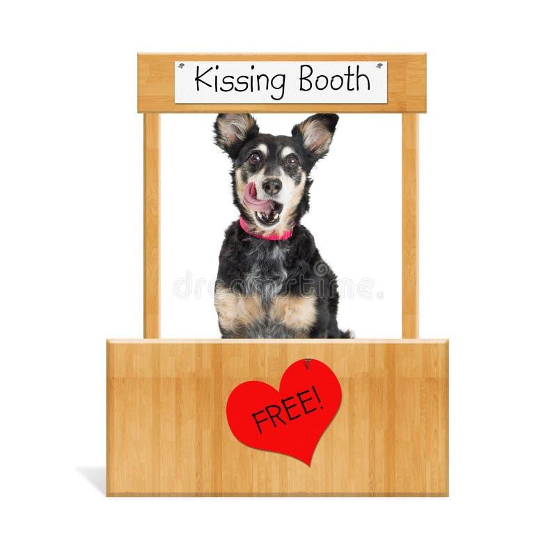 滑稽的狗亲吻的摊 库存图片