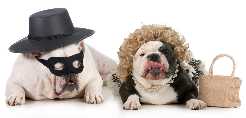 滑稽的狗夫妇 库存照片