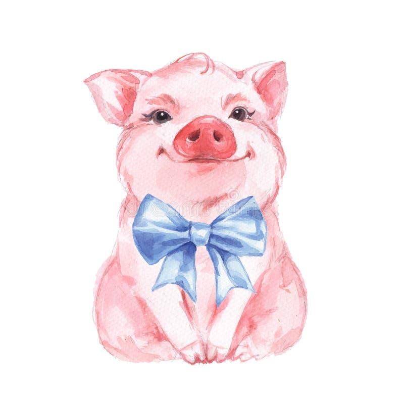 滑稽的猪和蓝色弓 查出在白色 逗人喜爱的水彩例证图片