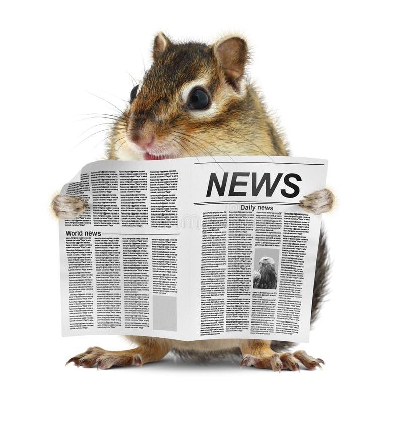 滑稽的花栗鼠读了报纸 库存照片