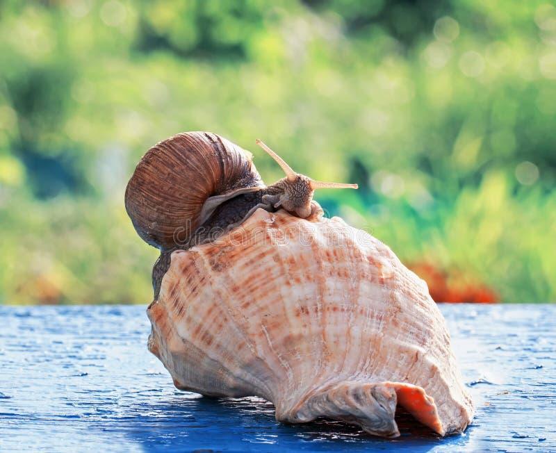 滑稽的蜗牛爬行庆祝在bea的乔迁庆宴党 免版税图库摄影