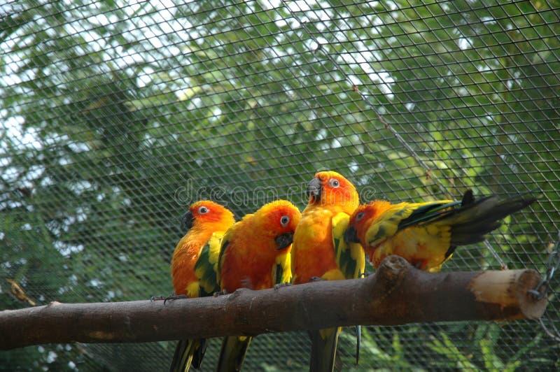 滑稽的鸟 免版税库存照片
