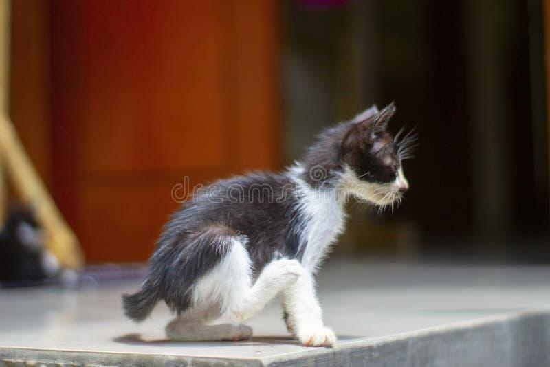 滑稽的黑白小猫坐门廊 免版税图库摄影