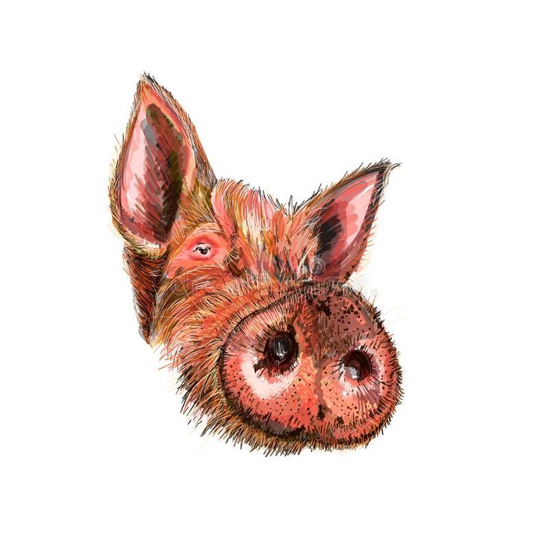 滑稽,逗人喜爱,疯狂的漫画人物猪 年的标志2019年 逗人喜爱的滑稽的猪 新年好 2019年肯定的中国标志 向量例证