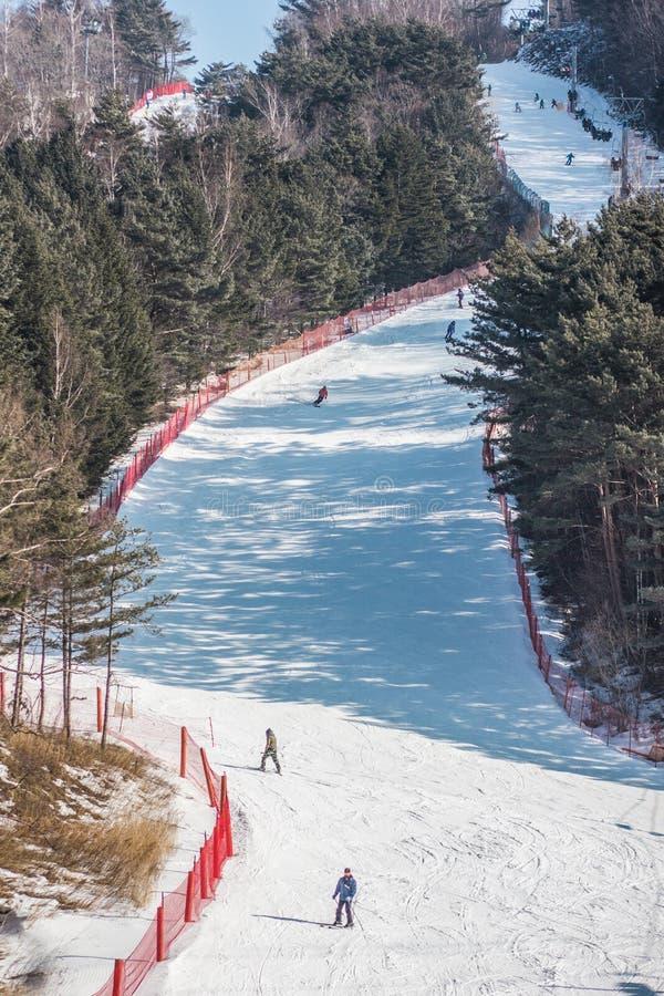 滑雪在韩国滑雪场的滑雪者的图片 图库摄影