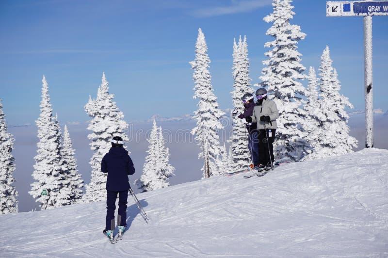 滑雪者和雪鬼魂:白鲑蓝鸫粉末天 库存照片
