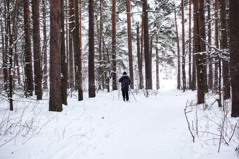 滑雪者在冬天森林里 库存照片