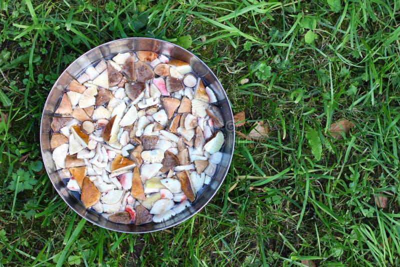 滚保龄球与森林可食的秋天蘑菇片断,在绿色gra 库存照片