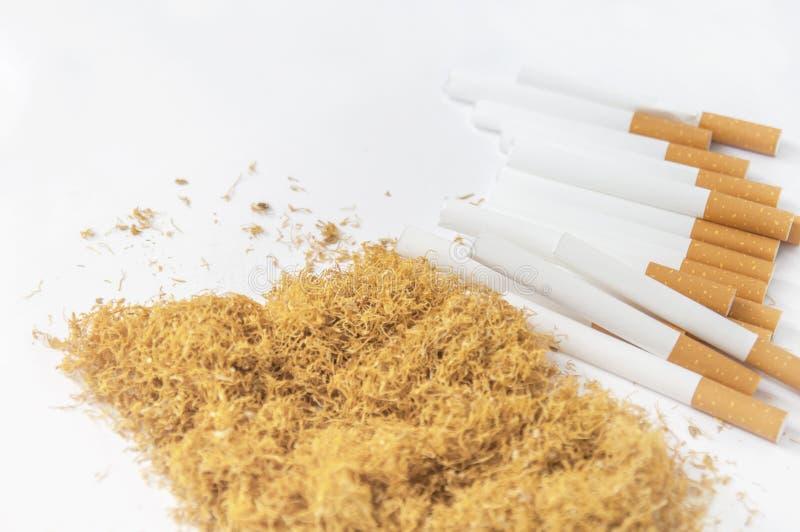 滚动的卷烟纸与堆烟草香烟在白色 库存照片