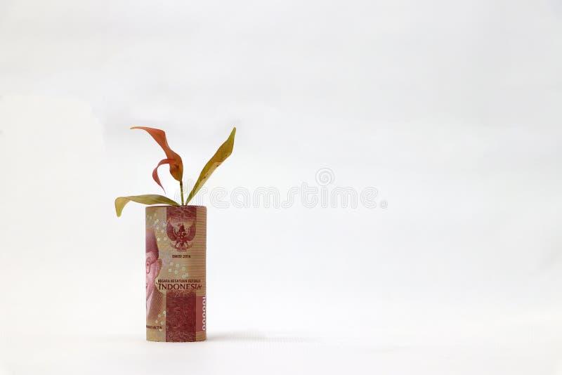 滚动的钞票金钱十万印度尼西亚卢比和年幼植物长大有白色背景 免版税库存图片