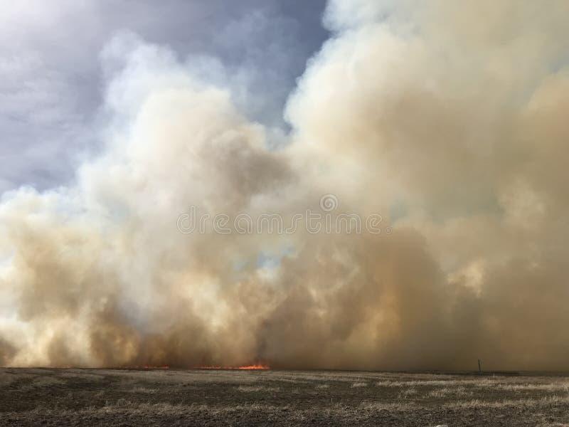 滚滚向前的白色烟云从灌丛火的 库存图片
