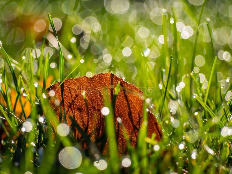 满地露水的草关闭与叶子 库存照片