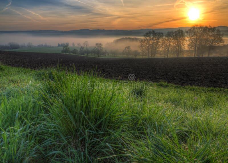 满地露水的雾草日出 库存照片