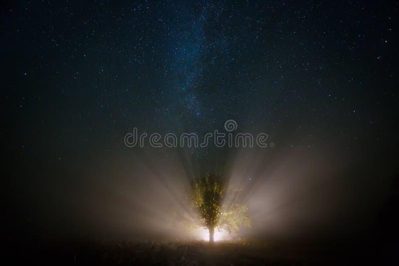 满天星斗的天空和不可思议的树由火炬点燃了 库存照片