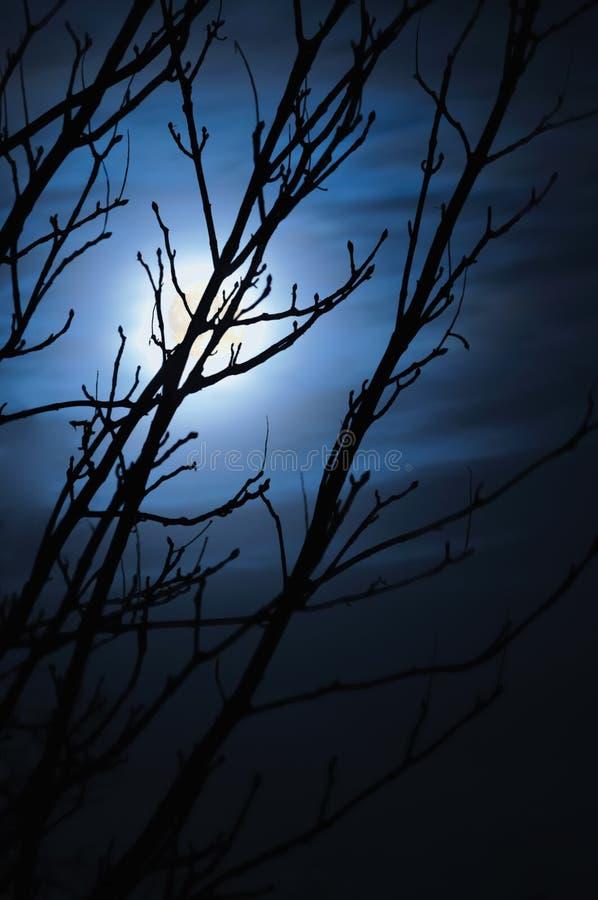 满月有雾的晚上赤裸不生叶的结构树 免版税图库摄影