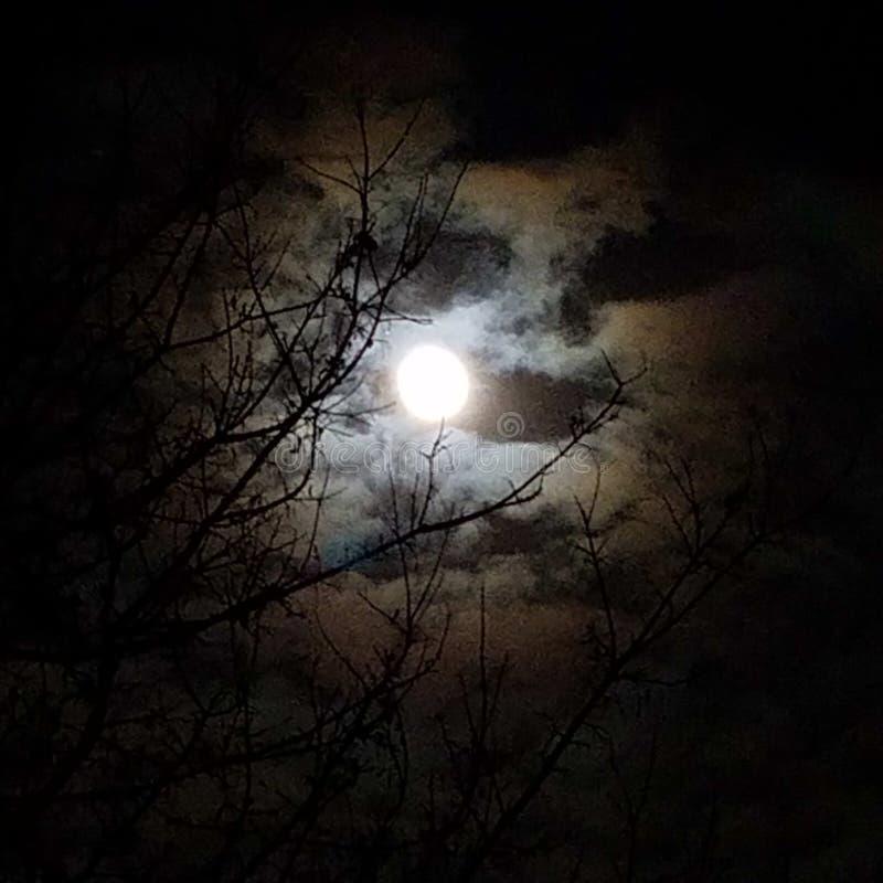满月阴影 库存图片