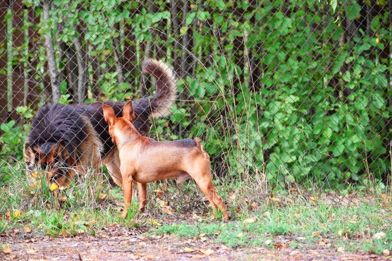 满足二的狗 免版税图库摄影