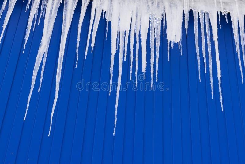 垂悬从屋顶房檐的冬天冰柱在a的在蓝色金属墙壁背景